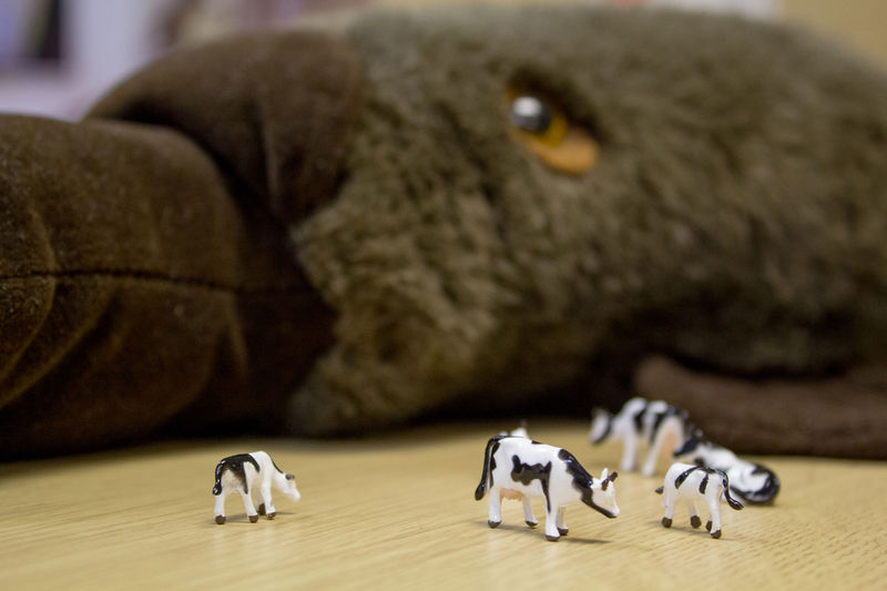 A photo of some plastic cows with a large soft toy platypus