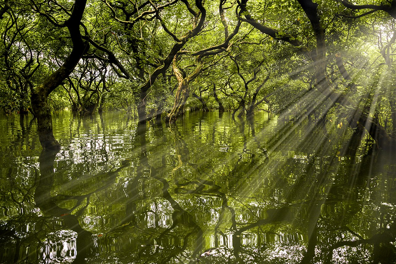 A lush green swamp forest, with rays of tigt streaming through the trees.